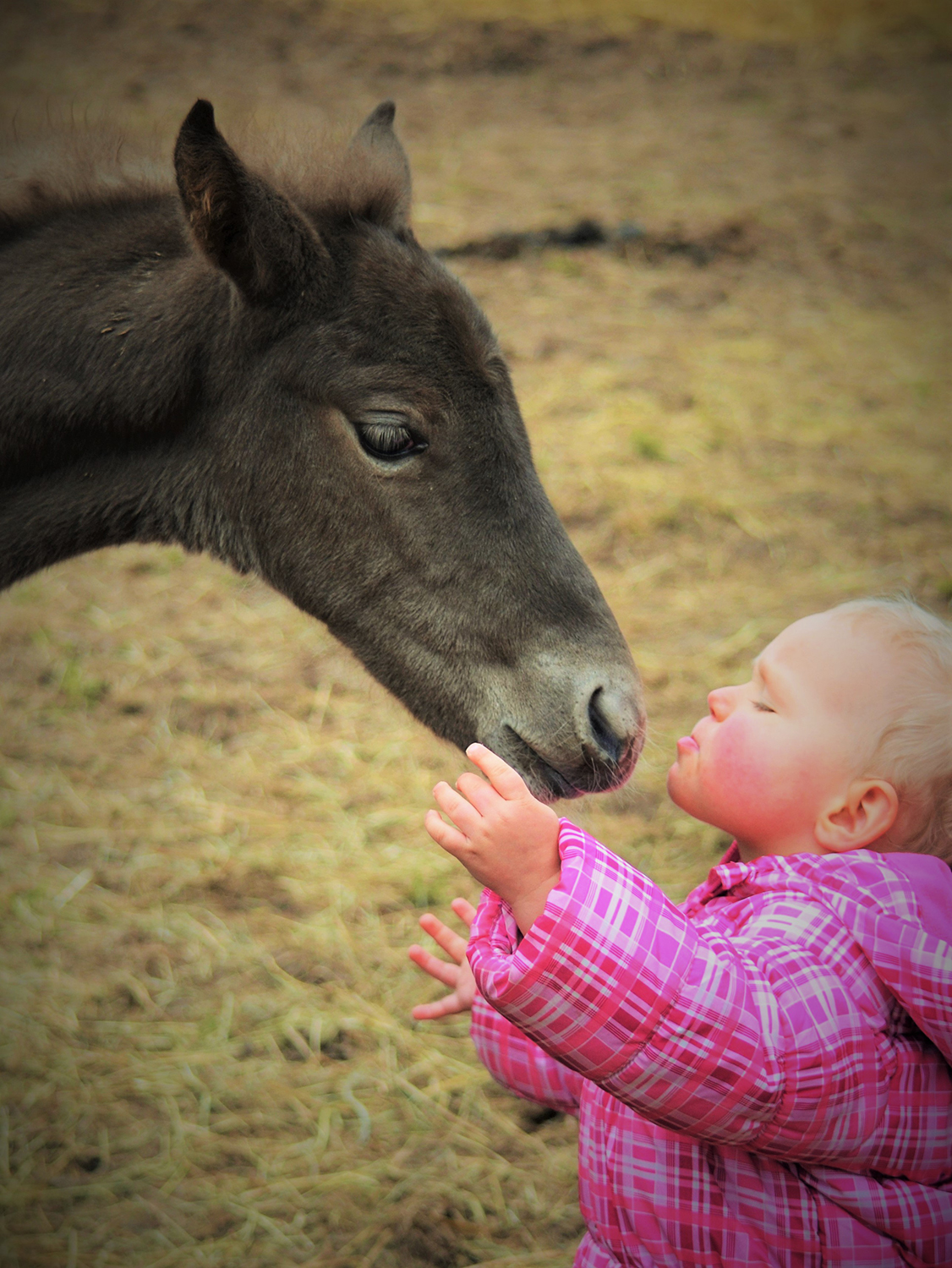 child with foal. Photo credit Toril Strooper
